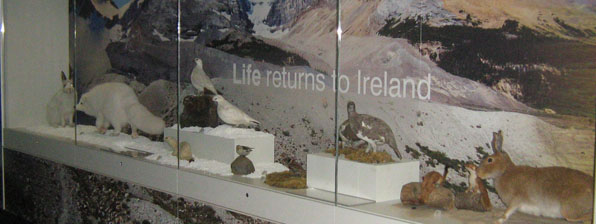 Interesting wording at the Ulster Museum, 2013