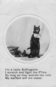 suffragette cat postcard