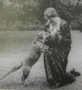 Nina, Duchess of Hamilton and Brandon, with a vulpine companion. Nina was responsible for evacuating hundreds of cats and dogs to her Ferne sanctuary in Summer 1939